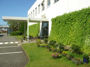 下関工場事務所「緑のカーテン」