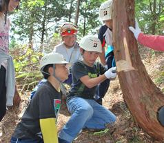 間伐のため木を切る体験