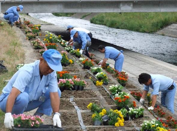 大山川を季節の花々で美しく彩る東海ゴムの従業員ら
