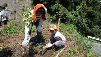 植林活動の模様
