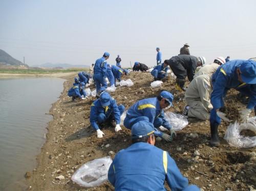 加古川河川敷への移植の様子
