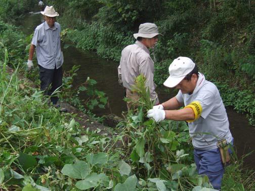 児童が安全に川に入れるように除草する従業員
