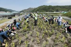植樹する参加者