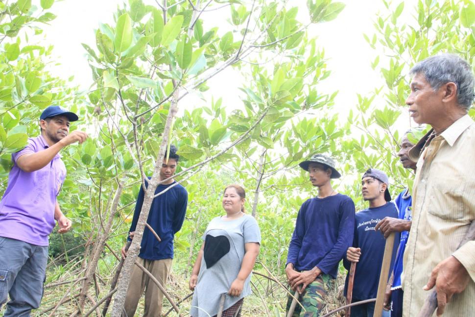 マングローブ植樹(タイ)