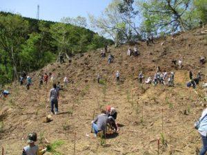 植樹を行う参加者たち