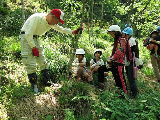 「エコピアの森 関」での間伐作業の様子