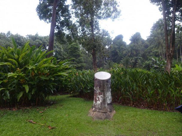 天然ゴム栽培発祥の地 BosnicGarden