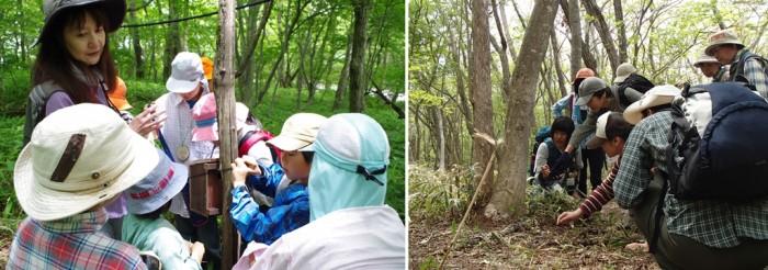 那須平成の森での自然体験活動の様子