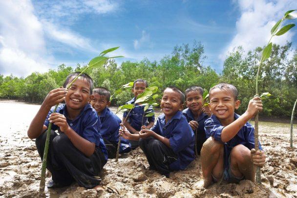 マングローブ植樹(インドネシア)