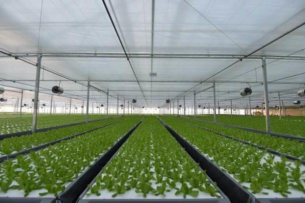 植物工場の様子2