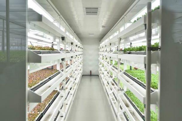 植物工場の様子1