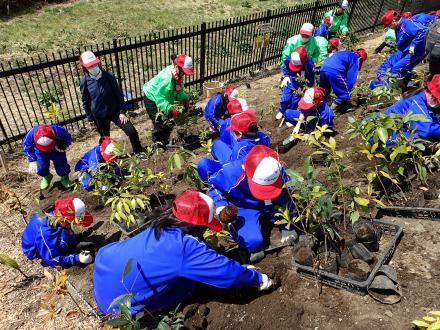 植樹指導の様子