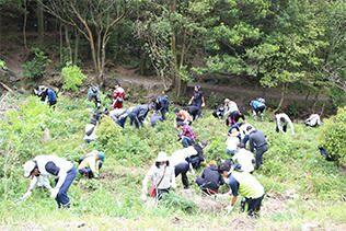 雑草の刈り取りによる森林整備
