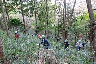 森林整備活動の様子
