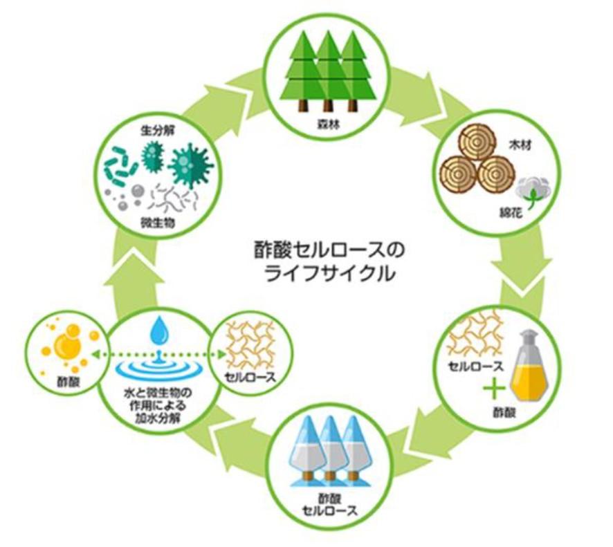 酢酸セルロースのライフサイクル