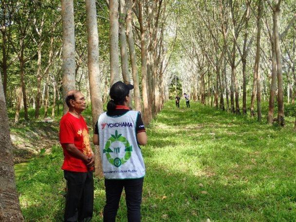 タイ・スラタニ地区での天然ゴム農園調査