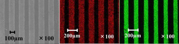 走査電子顕微鏡による表面観察とEDSによる元素分析