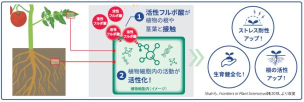 活性フルボ酸による活性化メカニズムと期待される効果