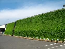 近畿中部物流第一センターのグリーンカーテン